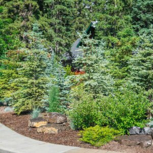 Calgary Landscaping trees