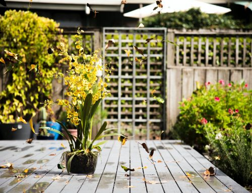 7 Garden and Landscaping Trends in 2021